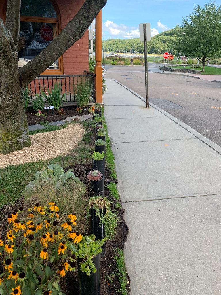 Sensory Garden Installed plants