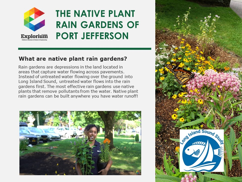 The Native Plant Rain Gardens Brochure